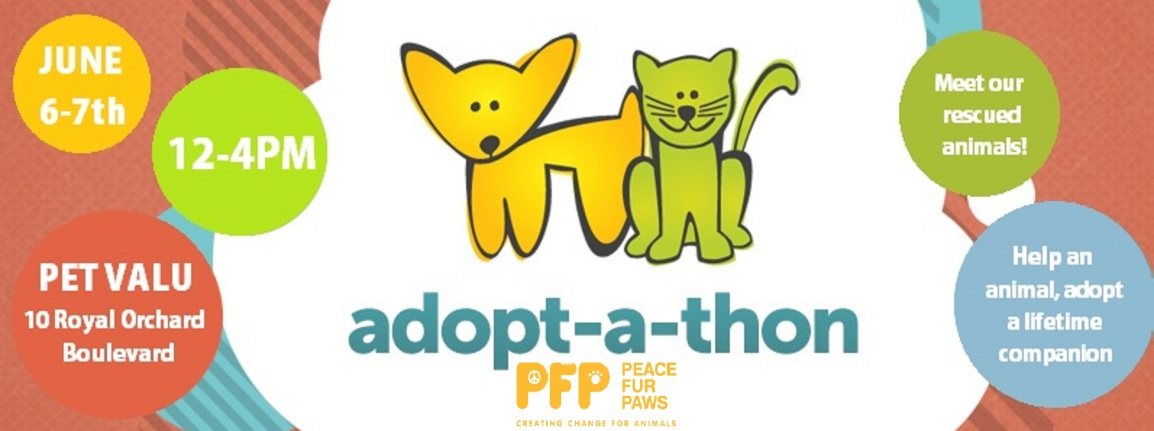 Help a pet, adopt a lifetime companion this weekend June 6-7th 12-4pm!