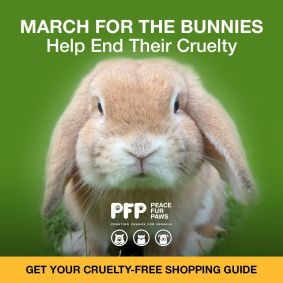 March for bunnies square