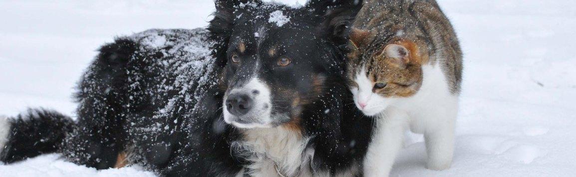 cat-dog-welfare-banner