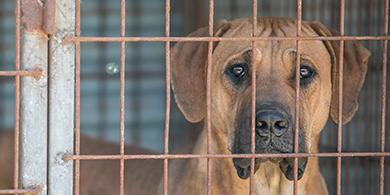 dog-cage-3
