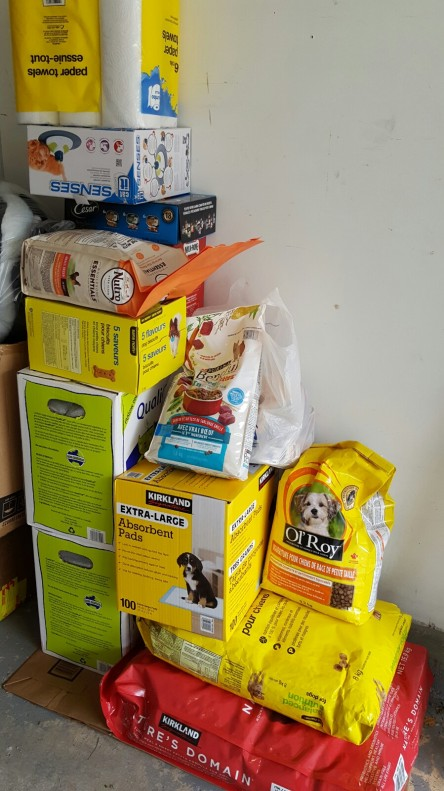 SomersetAcademy_fundrasier_fosterhome_adoptdontshop_cat_kitten_peacefurpaws_donation_charity_food_toys_bed_petsupplies_pet_familypet_family_animalwelfare_animalrescue_rescue_animal_welfa