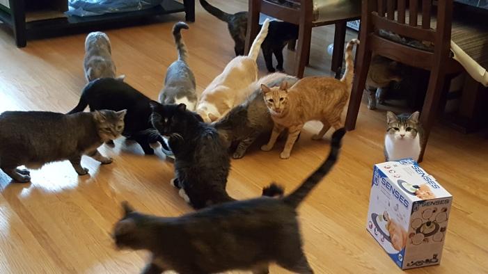 SomersetAcademy_fundrasier_fosterhome_adoptdontshop_cat_kitten_peacefurpaws_donation_charity_toys_bed_petsupplies_pet_familypet_family_animalwelfare_animalrescue_rescue_animal_welfare_fo