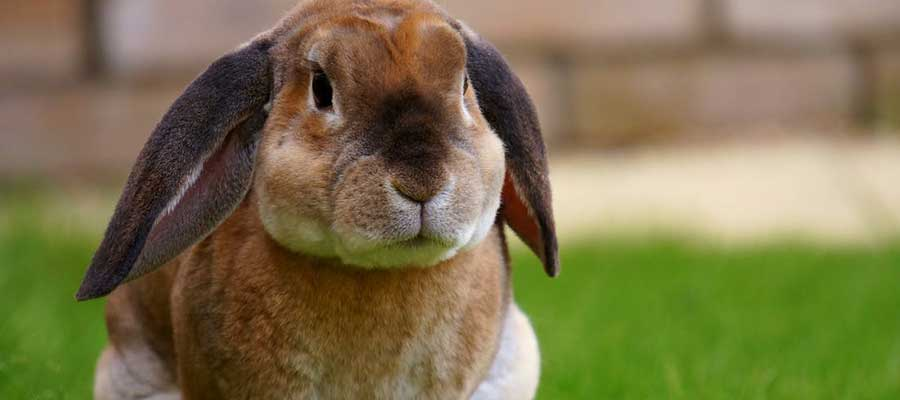 March for Bunnies: Cruelty-Free Guide