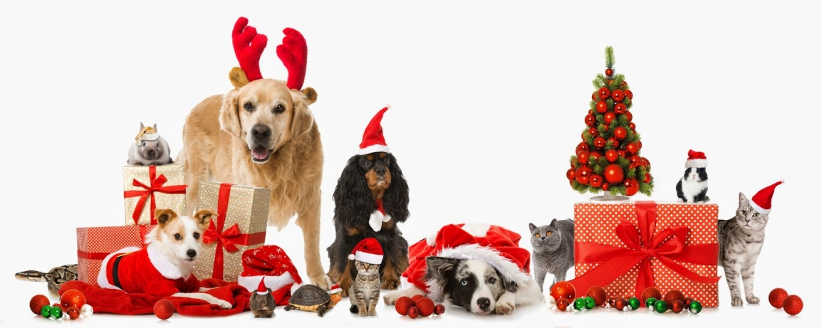 Upcoming Events: Holiday Market &more