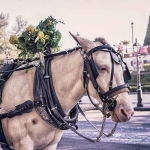 carriage-horse