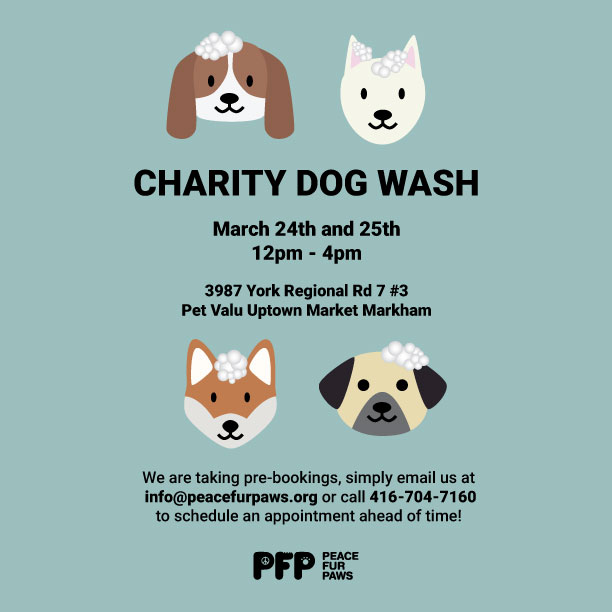 pfp-dogwash-final-social-media