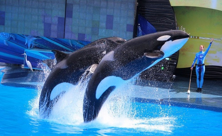 VICTORY! Bill to End Whale and Dolphin Captivity